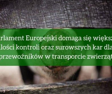 Parlament Europejski domaga się większej ilości kontroli oraz surowszych kar dla przewoźników w transporcie zwierząt